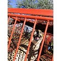 Namibia Cheetah Wildlife Animals Nature Farm
