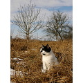 cat look winter grass animal