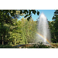 nature garden water tree rainbow