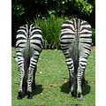 Zebra animal mammal nature wildlife butt