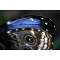 butterfly wings macro differences