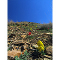 IRAN LANDSCAPE ASEMANKOOH mountains flowers