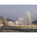frost trees road central otago new zealand littleollie