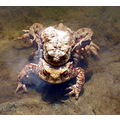 toads wildlife