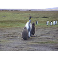 Penguin Falklands