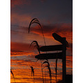 silhouetted sign post sunrise South Otago NZ