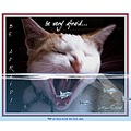 cat feline animal fear terror guppy spoof