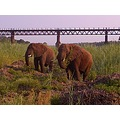 elephants the kruger park gate cefas zanie gertjie dblm