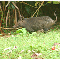 Ho'omaluhia