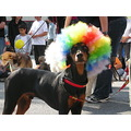 animalmonday dog clowning around