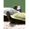 turtles wildlife