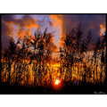 sunset sun panos sky orange