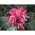 flower flowers flores shrubs plants brazil nature