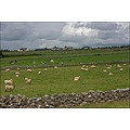Stone walls cattle sheep landscape nature fields traditional ireland