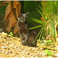 Spain Torremolinos cats nature