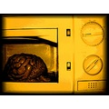 brain microwave experiment abstract damage hot cooking imagination