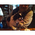 BPOE 1365 Bar Bartender Dog Shot Japanese Chin