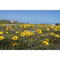 vacation africa cape agulhas valentine