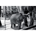 zoo animals elephant baby