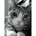 halle kitty cat black and white