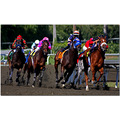 horse race thoroughbreds Santa Anita SoCal sports action