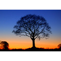 cold tree sunset rackenford devon