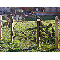 carbondale colorado gsfph streetart fence sculpture wildlife art