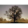 newbridge taw valley frost oak landscape