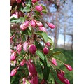 garden flowers red buds spring