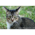 Cat Taiping Portrait
