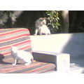 Cat stand up attack the cat set in down, I got it yesteday in our cafee for smokless , , , for ...