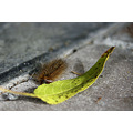 Caterpillar spitfire leaf garden littleollie