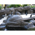 penguins hawaii hilton hawaiian village