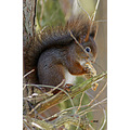 wildlife animal nature squirrel
