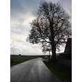 cinevilla nature tree road rain building sky autumn latvia