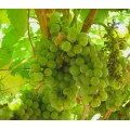 9/13