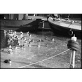 duckies ice boats water spakenburg holland