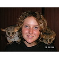 Greater African Bushbaby