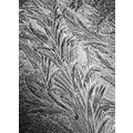 frost windscreen cold blackwhite