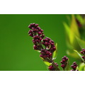 ShutterlySpectacularPhotography Flowerfriday Lilacs Flowers Macro Spring