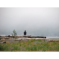 man logs fog beach