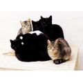 cats animals portugal algarve nature black contrast