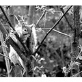 nature black and white squirel