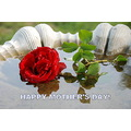 mothers day red rose