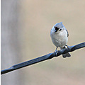 titmouse carlsbirdclub bird yard feeder visitor