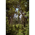 trees woods new forest hampshire england summer leaves wood nature