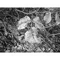 leaves of 3 leave them be! but to get a photo i had to venture close as my cell phone will not le...