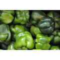 sunshinestate miamibeach florida green pepper vegetable