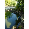reflection fish pond new home perth littleollie