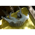 sleeping cat cotignac relaxation milbuhscatclub